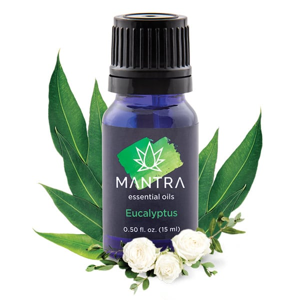 eucalyptus mantra oil